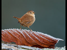 bird photography by john barlow